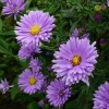 aster_the_archbishop_024